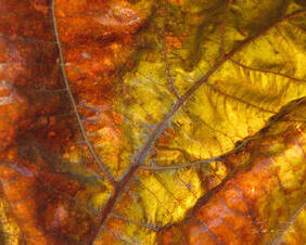 Autumn Leaf After Rain